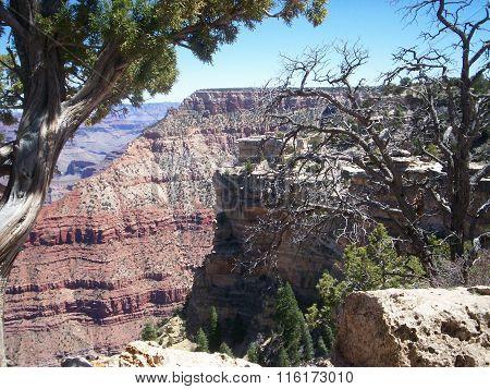 Grand Canyon, tree, bush and canyon
