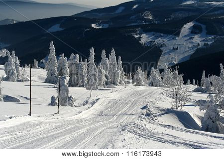 Snowy Scenery With Frozen Spruces In The Czech Mountains Krkonose