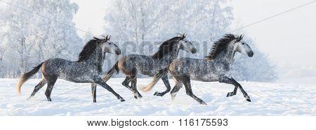 Horse herd run gallop across snowy field