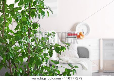 Room interior with sofa, commode and green tree