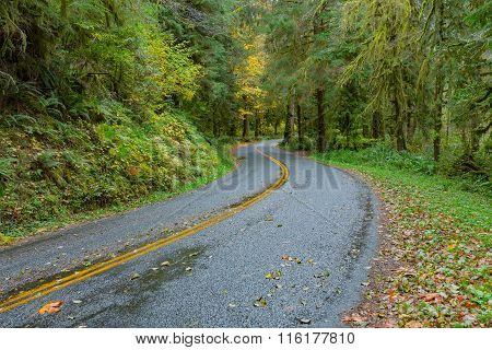 Road at Hoh Rainforest