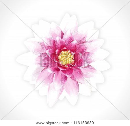 Vector pink flower isolated. EPS10.