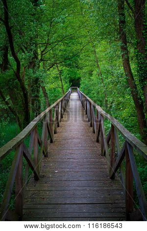 Bridge Into The Forest, Parco Dell' Adda