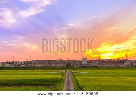 Beautiful Sunset Over Village With Green Cornfield.
