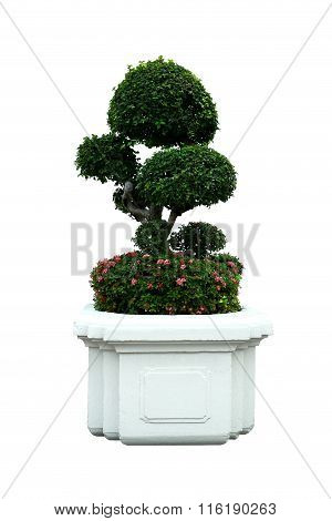 A Small Bonsai Tree And West Indian Jasmine (ixora) In A Ceramic Pot. Isolated On A White Background