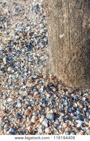 shells on the seaside