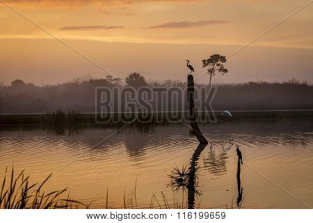 Sunrise In A Florida Wetland