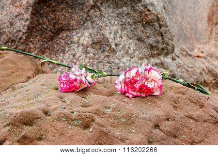 Two Pink Carnations On A Stone.