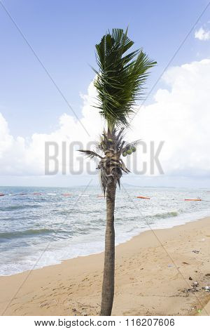 Palm Trees Ashore