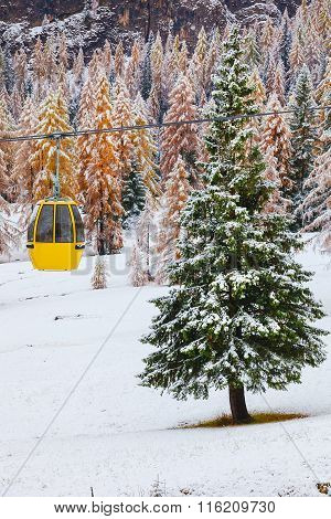 Snowy trees and colorful rail car