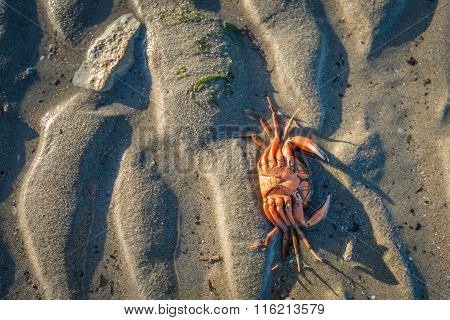 Orange Colored Crab On The Beach
