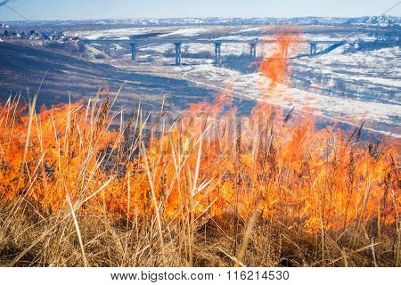 Wild grass on fire