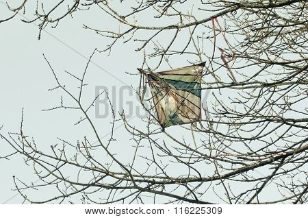 Lost Kite In A Tree