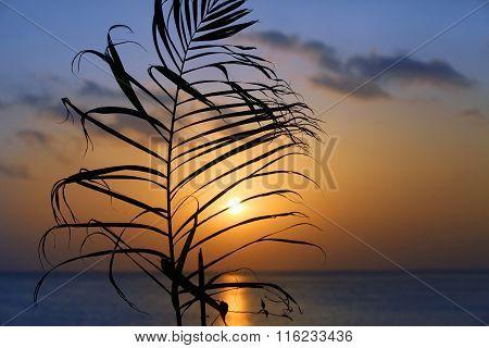 Branch Of Palm