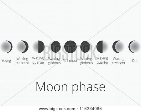 The Phases Of The Moon. The Whole Cycle From New Moon To Full. Vector Illustration.