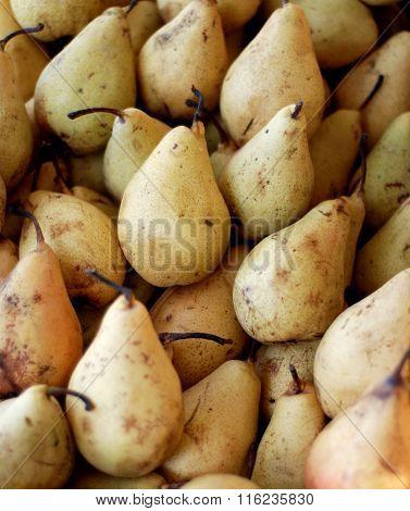 Ripe Pear Fruits . Food Concept