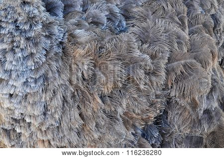 Gray ostrich feathers - background, texture