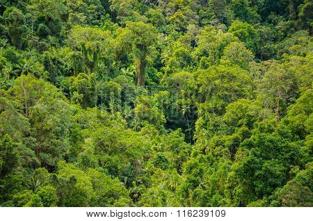 Rainforest In The Springbrook National Park, Australia