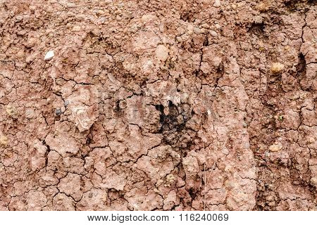 Crack Soil On Dry Season, Effect Of Global Worming, Soil Background And Texture