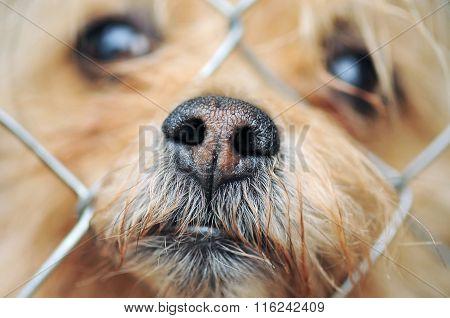 Dog's muzzle