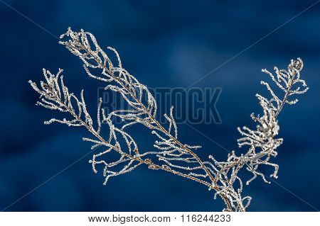 Sparkling Ice Covered Branch