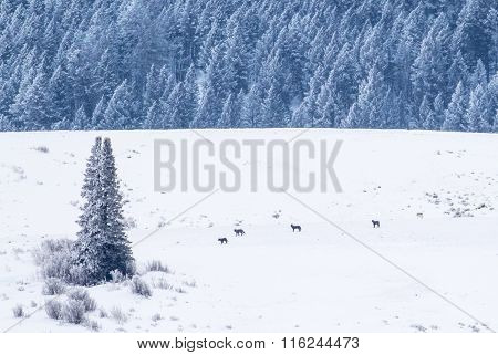 Wolves On A Field And Forest Landscape