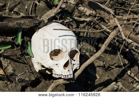 Hidden Skull On Soil