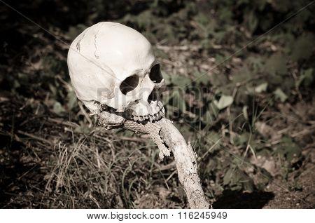 Human Skull On Log