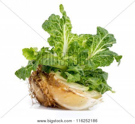 Cabbage Regrowing