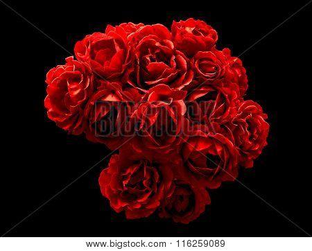 Surreal Dark Chrome Bush Of Red Rose Flowers Macro Isolated On Black