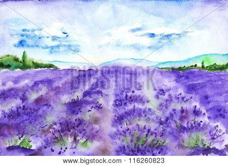 Watercolor Lavender Fields Nature France Provence Landscape