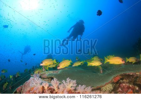 Tropical fish, coral reef and scuba divers underwater in sea ocean