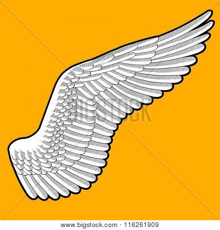 Drawing of bird's wing with detailed feathers on orange background