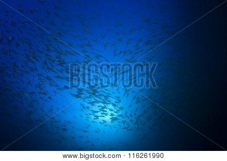 Fish underwater ocean