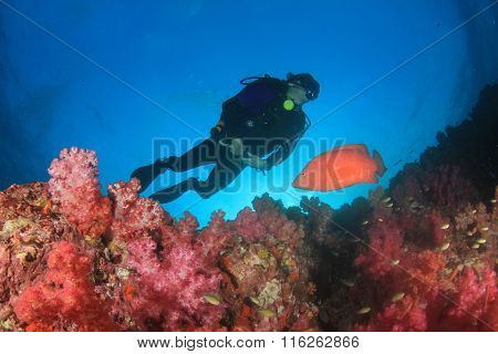 Scuba diver, coral reef and fish underwater sea ocean