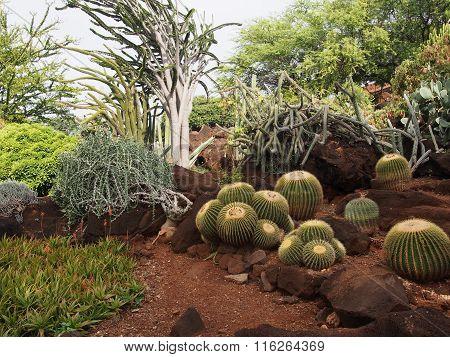 Cactus Garden in Honolulu