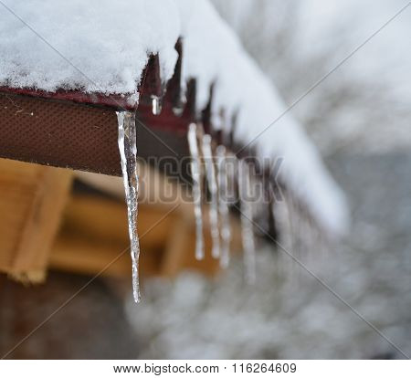 Icicles From Melting Snow, South Bohemia
