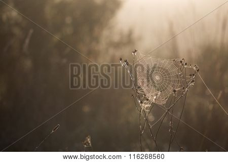 Dewy Cobweb Early Morning In Autumn Backlit