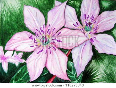 Watercolor Pair Couple Pink Clematis Flowers Nature
