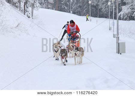 Sled Dog Race, dogs and driver during the competition