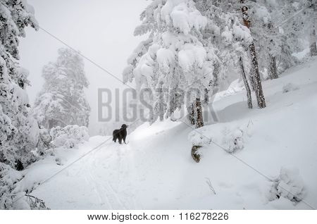 Dog In The Middle Of The Snowy Forest