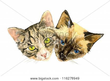 Close up fashionable portrait of two cute cats