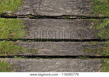Wooden Background With Moss
