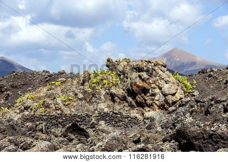 cold volcanic flow in detail in Lanzarote, Spain