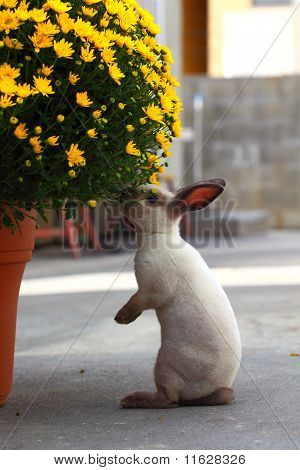 bunny and flowers
