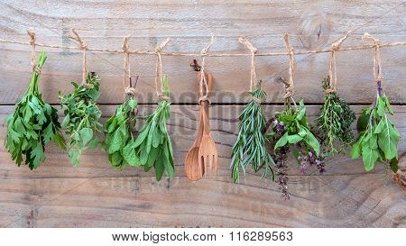 Assorted Hanging Herbs ,parsley ,oregano,mint,sage,rosemary,sweet Basil,holy Basil,  And Thyme For S