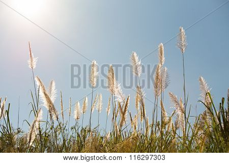 Thicket Flower And Blue Sky Background