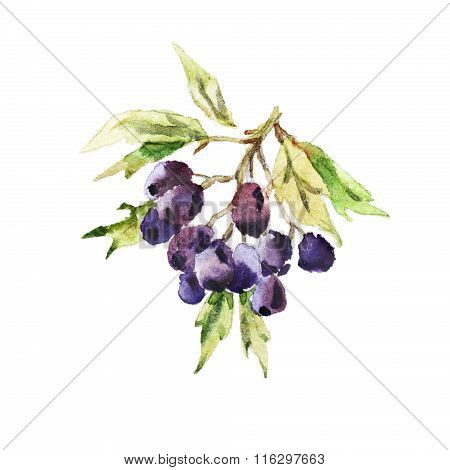 Watercolor Autumn Berries