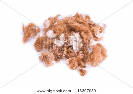 Group Of Dog Fur Trimmed During Grooming In Salon