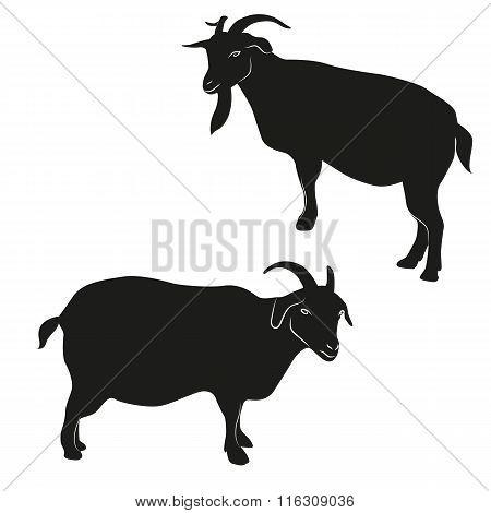 Decorative ornamental goats silhouette.